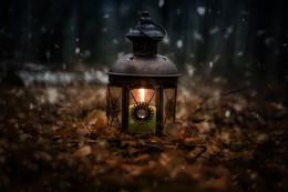в ожидании волшебства / фонарь в осеннем лесу