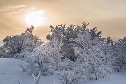 После снегопада / Заполярье