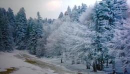 зима / зима