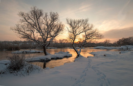 Зимние красавицы. / Река Южный Буг. Украина.