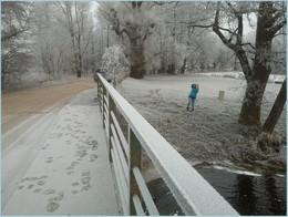 мост / Польша, Беловежа, январь
