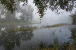 Утро на лесном озере. / Утренний туман на лесном озере.