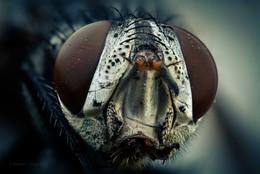 Чёрный монстр... / Портрет чёрной мухи.