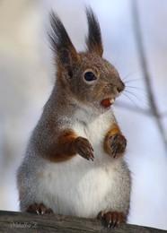 А там белочка живет и орешки все грызет... / Забавные белки