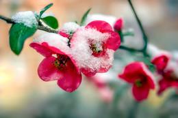Весна / ***