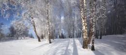 Зимний лес. / ***