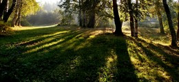 Свет и тени....... / Шуваловский парк. Сентябрь