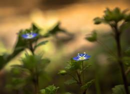 Весенний отблеск синего... / ***