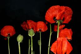 ожидание рассвета / цветы подьмосковья
