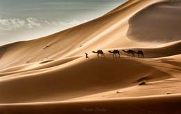 Сахара / Дюны Сахары