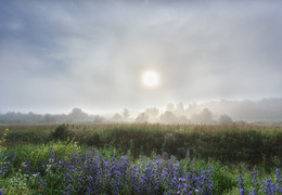 Утро туманное / Июль.