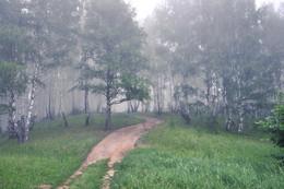 Дорога в туман. / Утро в туманном лесу.
