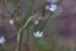 Цветочек... / Природа..