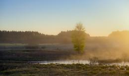 Туманная зарисовка утра / Рассветные туманы.