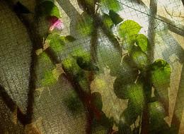 Через стекло / растение, цветы через стекло