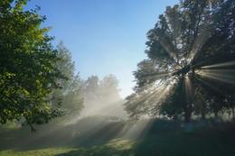 Лучистое утро. / Летнее утро в парке.
