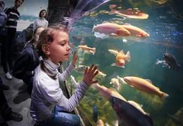 Прикосновение / Девочка в океанариуме