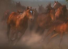 / Лошади,движение