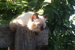 кот Бусидо. еще малыш. / сегодня всемирный день кошек