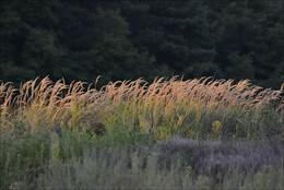 Травы-муравы / Пейзажный пленэр