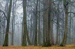 Туманный лес / ***