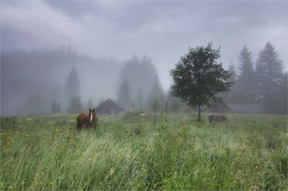 """По высокой траве ... / По высокой траве ходят лошади тихо.  (Серия """"Карпатские сюжеты"""")"""