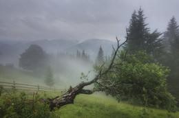 Старая яблоня / Карпатские сюжеты