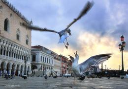 """Пока нет туристов / Из серии """"Проснуться в Венеции""""."""