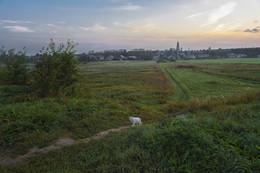 Кот, который гуляет сам по себе / Утро ,сентябрь, Суздаль, кот, который гуляет сам по себе