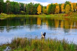 Осенние краски природы. / СОБАКА ПОГНАЛАСЬ ЗА УТКАМИ. НО ПОНЯЛА. РОЖДЕННЫЙ ПОЛЗАТЬ, ЛЕТАТЬ НЕ МОЖЕТ. ВТОРАЯ БЕРЕЗА СЛЕВА, ПОХОЖАЯ НА ЧЕЛОВЕЧЕСКИЙ ОБЛИК.