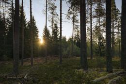 Утренний солнечный взгляд / Осенний лес.
