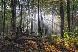 Запах осени / Октябрьский туман почти рассеялся, но в лесу ещё играет в лучах яркого солнца. Минск. Район улицы Филимонова
