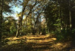 в старом парке / фото сделано во время прогулки по заброшенному парку