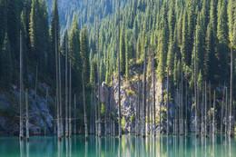 озеро Каинды с мёртвыми соснами / озеро
