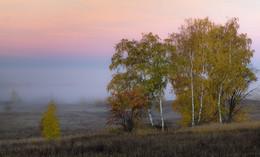 Краски осени на фоне тумана. / Рассветы Октября.