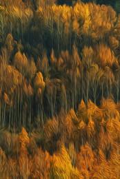 Позолоченный сезон / Осенний костёр ... а вокруг летал, падал лист, а мы его шуршали ногами