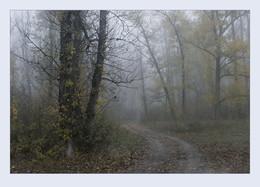 Осенний туман / ***