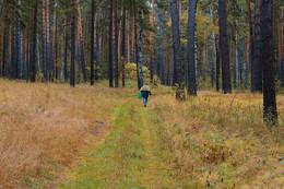 Осенний лес / В лес по грибы