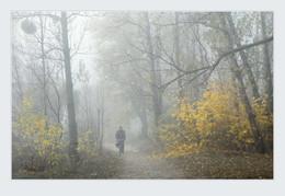 Туман / ***