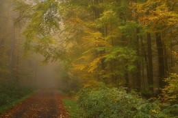 Лесное разноцветье. / Осеннее утро в лесу . Зарисовка .