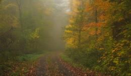 На мольберте осень / Зарисовка осеннего лесного утра.