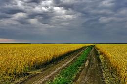 Хлеба поспели. / Пора убирать урожай.