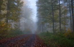 Осень в тумане. / Утренний осенний пейзаж. Зарисовка .