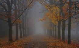 Осеннии аллеи / Ботанический сад