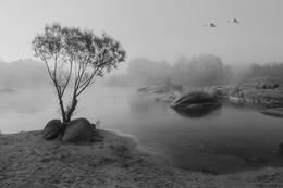 Перелёт / Река Южный Буг. с. Мигея. Украина.