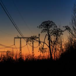 О параллельности бытия ... / Осенней ночью травы шуршат и провода гудят... Почему-то человек уже совсем параллелен с природой...