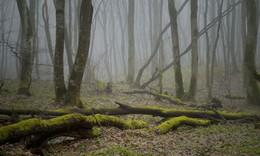 Туманое утро / Ставропольский лес