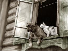 """Идилия"" / Снимок сделан в конце 80-х на традиционном коротком /""дагональном""/маршруте: работа - дом..."
