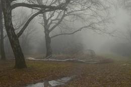 Туманое утро / Ставропольский ботанический сад