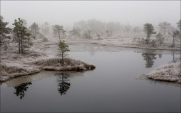 Иней и болото / Балтика